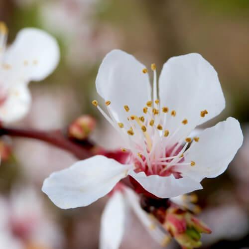 photodune-1874088-flowers-m